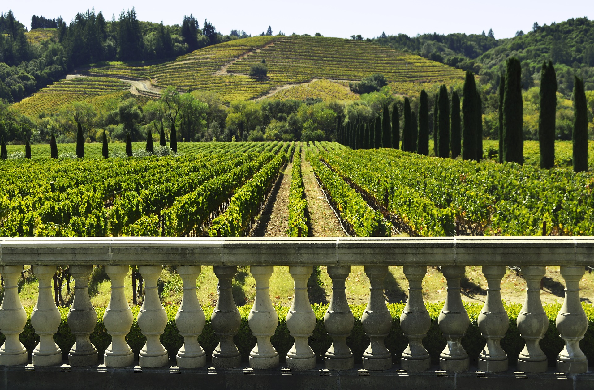 Tips for Your Trip to Sonoma